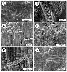 geosciences free full text mineralogy of paleocene petrified