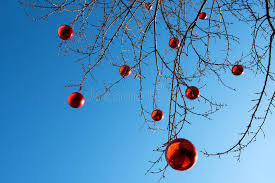 balls on an outdoor tree stock image image of