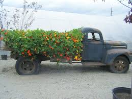 123 best vintage cars and trucks in a garden or