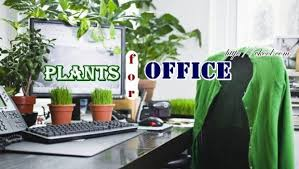 plants for office 10 indoor plants for office space you should know