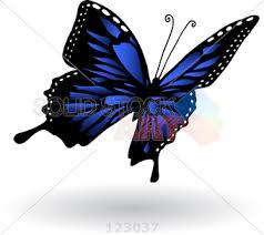stock illustration of karner blue butterfly flying on white background