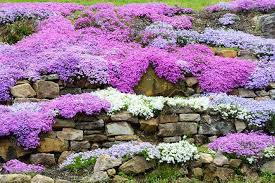 Best Plants For Rock Gardens Sketchy Sloth The One And Only Portal For Sloths Best Plants For