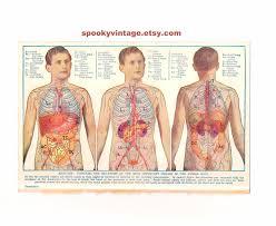 Human Anatomy Male Male Human Organs Anatomy Anatomy Chart Body