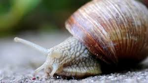 true facts about the land snail youtube