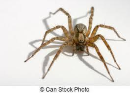kasten ältest wanzen auf haus stockfoto bild kasten insekten stock fotos und bilder 302 788 insekten bilder und