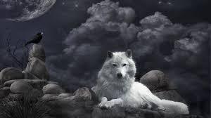 wolf wallpaper hd free download pixelstalk net