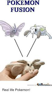 Meme Center Pokemon - pokemon fusion memecentercom gm efeniera memecentercorn9m an real