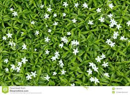 Flower Bed Plan - flower bed stock photo image 41854443