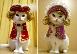 Pet Cat Halloween Costume 8 Pet Halloween Costume Ideas