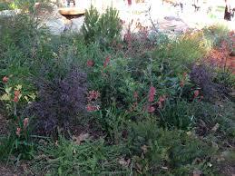 native plantings my melbourne garden show highlights u2013 janna schreier garden design