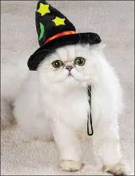 Persian Halloween Costumes Cats Costume 2