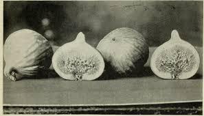 file descriptive catalogue of deciduous fruit trees citrus trees