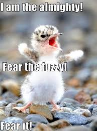 Funny Penguin Memes - adorable penguin memes penguin best of the funny meme