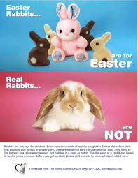 real rabbits are not for easter not easter xmas gifts