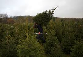 what artificial christmas tree was black friday deal at home depot how to buy a real christmas tree purchase and care tips to make