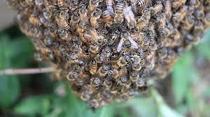 package cluster keeping backyard bees