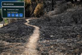 Wildfire Parks Canada by Waterton Forest Will Renew After Wildfire But It Will Take