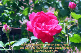 scripture about flowers christian bible verse natural flowers