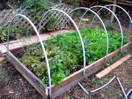 cold frame hoop house style wild gourd farm