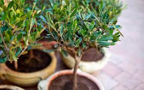 growing a mediterranean garden in a few simple steps