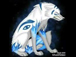 black wolf vs white wolf