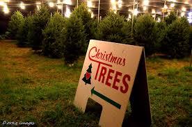 hart t tree farms christmas tree lot pompano beach florida