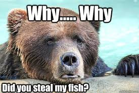 Sad Bear Meme - why why did you steal my fish sad bear quickmeme