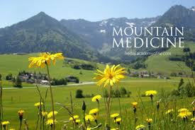 native american plants used for medicine mountain medicine yarrow and arnica uses