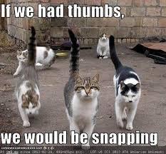 Funny Cat Birthday Meme - happy birthday meme cat happy birthday cat meme funny