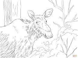 eastern moose coloring page free printable coloring pages