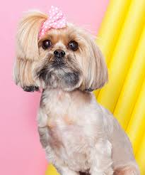 dog instagram hairstyles