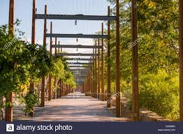 trellis stock photos u0026 trellis stock images alamy