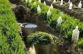 how to make and use liquid manure compost survivopedia