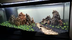 Aquascape Shop Manzanita Driftwood Com Stunning Aquarium Driftwood