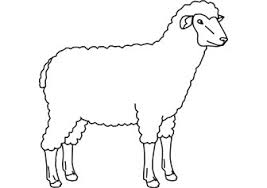 coloring pages amusing sheep coloring pages cute small