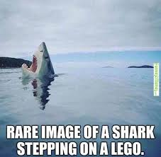Humorous Memes - best 25 funniest memes ideas on pinterest animal memes top 10