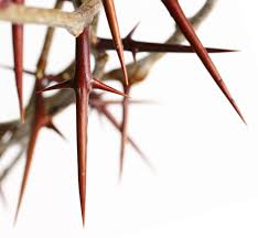cross in crown of thorns thank you jesus doug1021 flickr