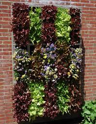 Vertical Garden Walls by Vertical Lettuce Wow I Wonder How Well This Would Work In Az I