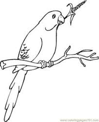 parrots coloring pages parrot on branch coloring page рисунки pinterest stenciling