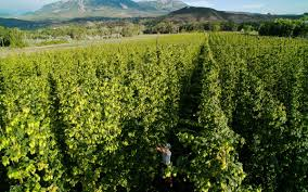hops farming grows slowly despite brewers u0027 demand