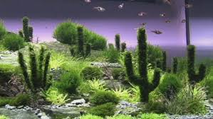 Plants For Aquascaping Desert Underwater Aquascape Including Cactus Plants Daily Mail