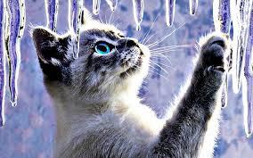 imagenes abstractas hd de animales animales gatos abstractos hielo artístico de escritorio linda