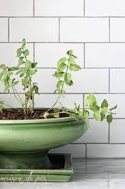 Bathroom Flowers And Plants 10 Places To Put Indoor Plants Maison De Pax
