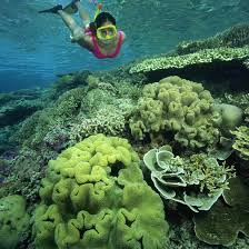 Florida snorkeling images Snorkeling laws in florida usa today jpg