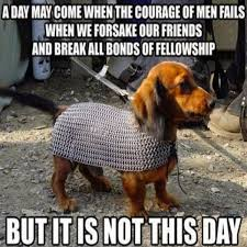 Cool Dog Meme - 23 really funny dog memes funny dog pictures