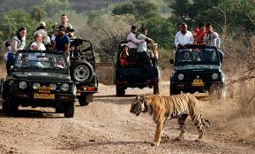 Wildlife tours package india wildlife tour book wildlife tour