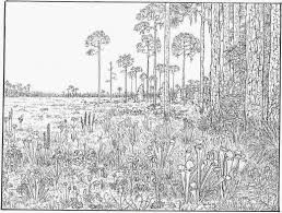 free printable coloring pages for adults landscapes free printable nature coloring pages for adults 12497