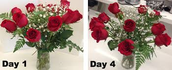 Best Flower Delivery Service Best Flower Delivery Services Ordering Roses For Mother U0027s Day