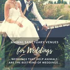 wedding help animal sanctuary rescue wedding venues get married help animals