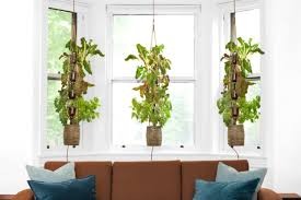 new hydroponic garden